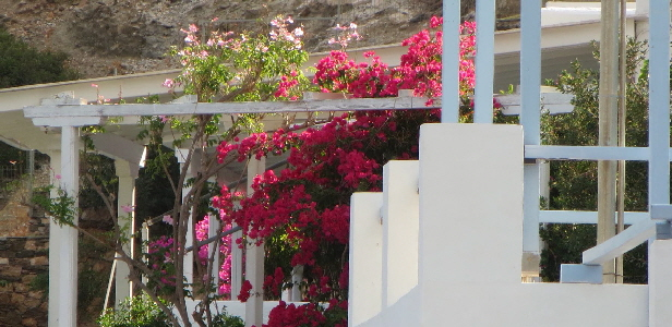 The colour - Bouganvillia - Vathy, Amorgos